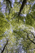 Treetop Canopy Background — Stock Photo