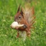 Squirrel eating field mushroom — Stock Photo #74441611