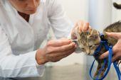 глядя для уха клеща, маленький кот — Стоковое фото