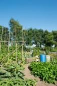 Vegetable garden in summer — Stock Photo