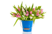 Pink and white tulips in blue bucket — Stock Photo