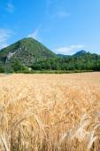 Agriculture landscape in South of France — Stock Photo