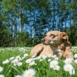 Dog in nature — Stock Photo #67762405