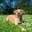 Dog in nature — Stock Photo #68975825