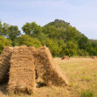Blocks with hay in the fields — Stock Photo #70737809
