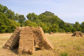 Blocks with hay in the fields — Stock Photo
