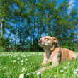 Dog in nature — Stock Photo #71881015