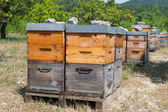 Bee hives in orchard — Stock Photo