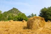 Hay bails in landscape — Stock Photo