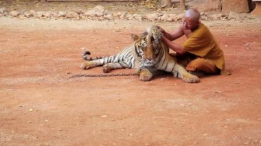 Monk at tiger temple — Video Stock