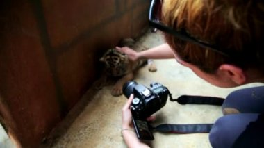 Girl taking picture of baby tiger — Stok video