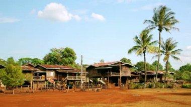 Lao village life around coffee planted — Stock Video