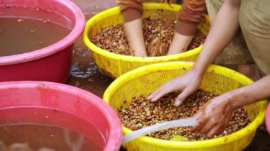 Farmers washing coffee — Stock Video