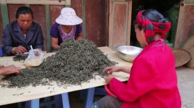 Woman tea workers — Stock Video