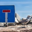 Sea gull and traffic sign — Stock Photo #68153543