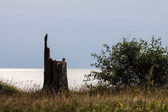 Evening on shore of the Baltic Sea — Stock Photo