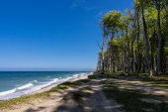 Coastal forest on the Baltic Sea coast in Nienhagen — Stock Photo