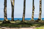 Coastal forest on the Baltic Sea coast — Stock Photo