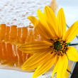 Honeycomb and yellow flower — Stock fotografie