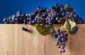Crop of grapes for wine manufacture — Stock Photo