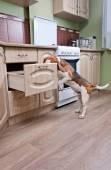 Cachorro na cozinha — Foto Stock