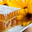 Honeycomb and yellow flowers — Stock fotografie