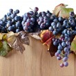 Crop of grapes for wine manufacture — Stock Photo #54976713