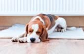 dog has a rest  near to a warm radiator — Stock Photo