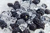 Ripe blackberry with ice — Stock Photo
