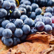 Crop of grapes for wine manufacture — Stock Photo #62609035