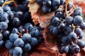 Blue grape — Stock Photo