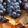 Crop of grapes for wine manufacture — Stock Photo #70911155