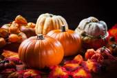 Pumpkins for Thanksgiving and  Halloween — 图库照片