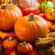 Pumpkins for Thanksgiving — Stock Photo #56138017