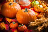 Pumpkins for Thanksgiving — Stock Photo