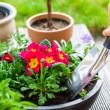 Planting herbs and flowers — Stock Photo #68200879