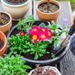 Planting herbs and flowers — Stock Photo #68200909