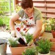 Planting flowers and herbs — Stock Photo #68200939