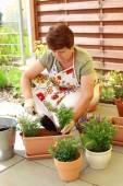 Planting flowers and herbs — Stock Photo