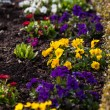 Spring flowerbed — Stock Photo #69764033