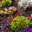 Spring flowerbed — Stock Photo #69764047
