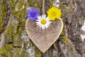 Heart of love on tree bark — Stock Photo
