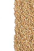Uncooked buckwheat — Stock Photo