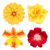 Set of flowers. Photo-realistic vector illustration — Stock Vector