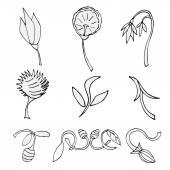 花卉小品集 — 图库矢量图片