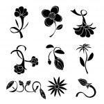 Set of black flower design elements — Stock Vector #69576243