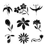Set of black flower design elements — Stock Vector #69576253
