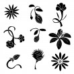 Set of black flower design elements — Stock Vector #69576259