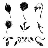 Set of black flower design elements — Stock Vector