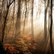Autumn forest with lights — Stock Photo #54018297